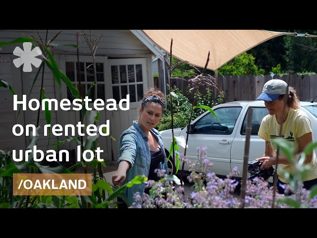 Urban self-reliance: homestead in Oakland's small rented lot