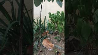 Mom Cat And Kittens With Playing - Cute Cat Play Video