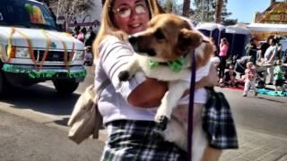 Las Vegas Corgis St Patricks Day Parade