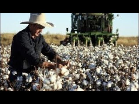 [Thingkung Machine] Cotton Documentary