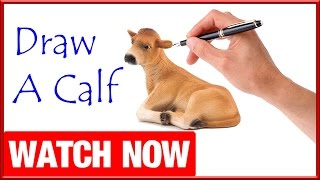 How To Draw A Calf - Learn To Draw - Art Space