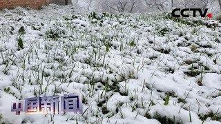 [中国新闻] 立夏已过 中国多地出现降雪天气 | CCTV中文国际