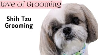 Trimming between a Shih Tzus eyes