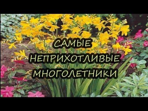 Вопрос: Какие есть ремонтантные цветы многолетники?
