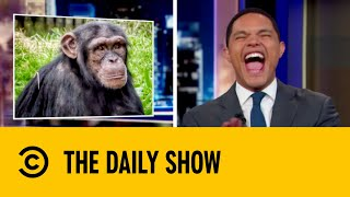 Academic Apes Use Instagram | The Daily Show with Trevor Noah