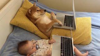 赤ちゃんとワンコがベッドで映画を鑑賞する姿がキュート!けど、一緒に観るのが一番楽しい