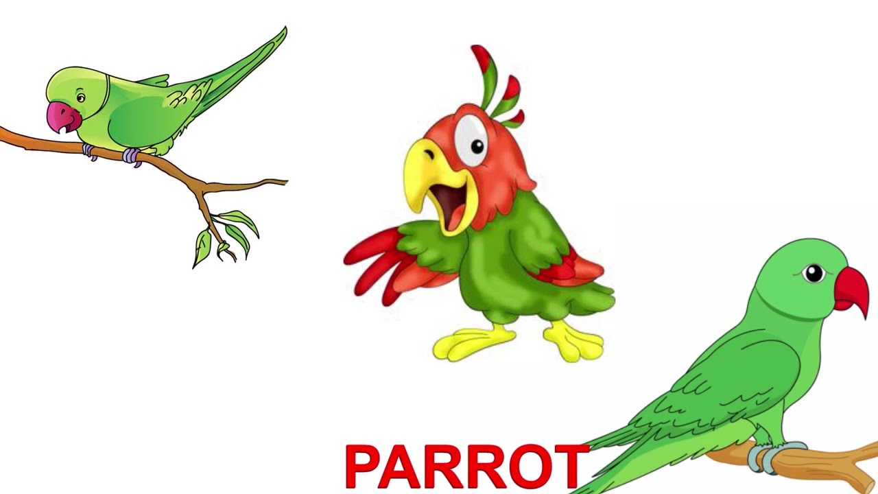 parrot for kids Crafts,actvities and worksheets for preschool,toddler and kindergartenfree printables and activity pages for freelots of worksheets and coloring pages.