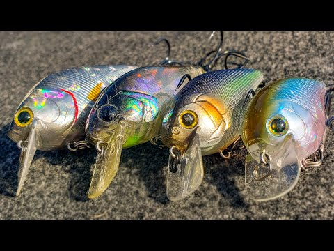 Squarebill Crankbait Tricks You Haven't Tried (But Your Friends Have!)
