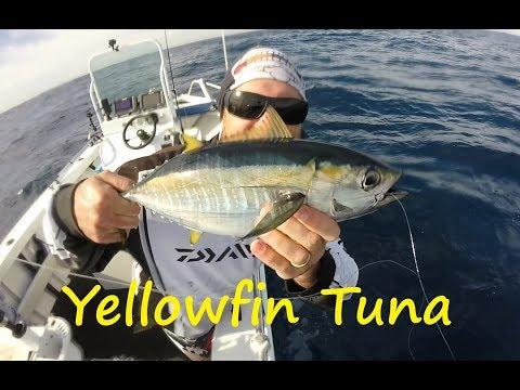 Yellowfin FAD Sydney