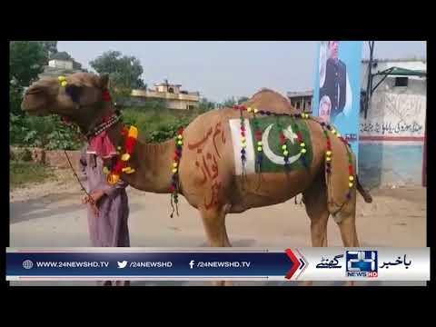 Nawaz Sharif ki rally me Sadqay ka Camel kiraye Ka nikla