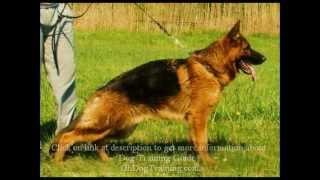 German Shepherd Training Tips - Make German Shepherd Dog Training Easy With Free Guide