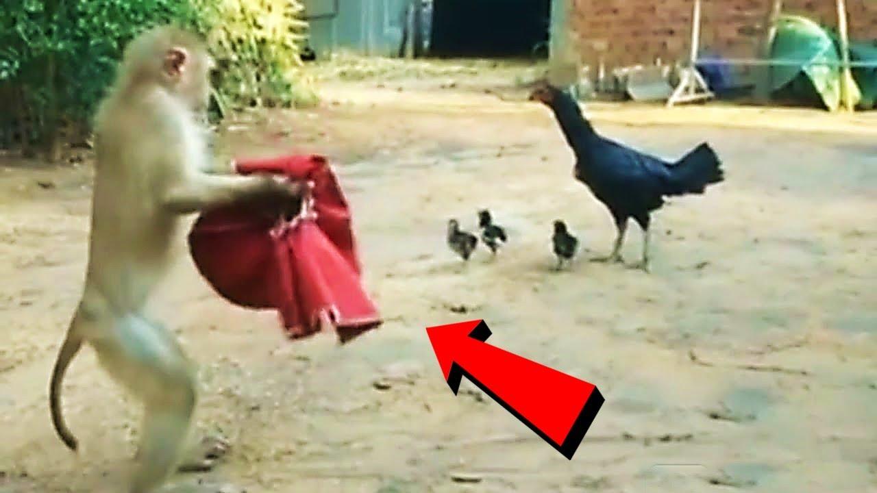 जानवरों के ऐसे कारनामे देखने के लिए नसीब लगता है दोस्त | Weird & Funny Animal Moments Part -18
