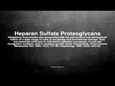 Medical vocabulary: What does Heparan Sulfate Proteoglycans mean
