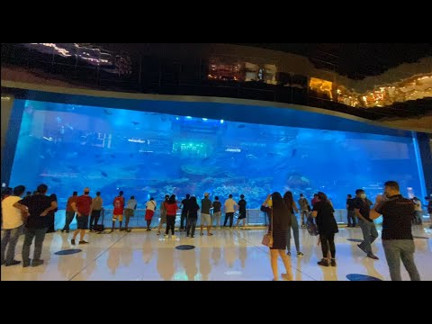 DUBAI MALL Tour (Part 5 – Dubai Aquarium and Underwater Zoo) Walkthrough ~ The True Marvel of Dubai