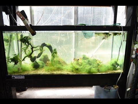 Aquarium heating tips cichlid contest youtube for Dustins fish tanks