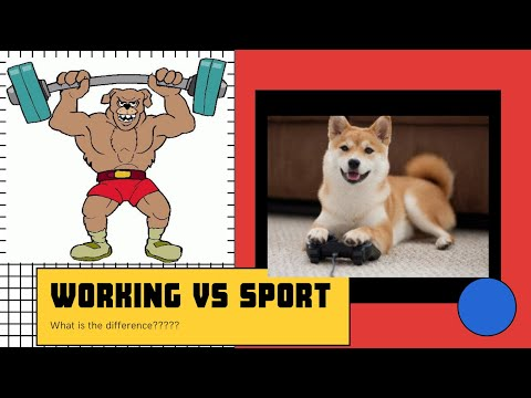 Working vs Sport dogs, the difference! better quality
