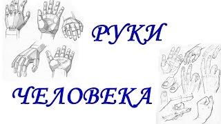 РУКИ ЧЕЛОВЕКА(Всем привет! В этом видео я расскажу Вам, как нарисовать пальцы рук, ногти, а также поделюсь некоторыми секре..., 2015-05-06T12:46:35.000Z)