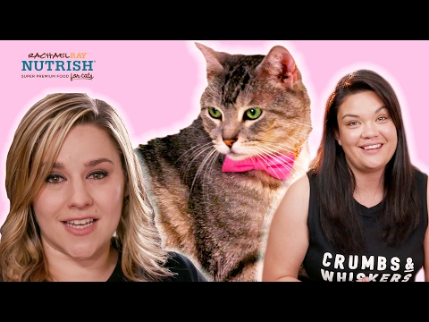 Thumbnail: People Who Hate Cats Work In A Cat Cafe // Presented By BuzzFeed & Rachael Ray Nutrish