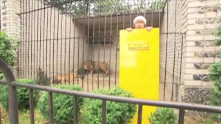"""Safronovy Brothers - Tigers cage (""""Ukraine Miracles"""")"""