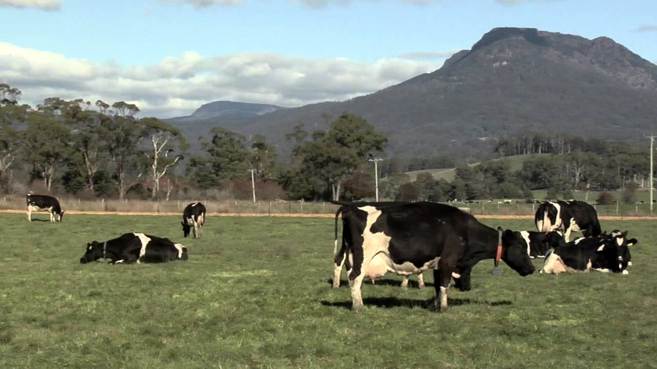 DeLaval AMR - Innovating future dairy farming - YouTube for Canadian Dairy Farms  575lpg