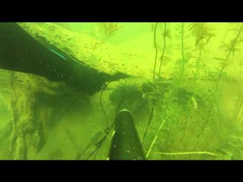 Spearfishing Lake Ouachita