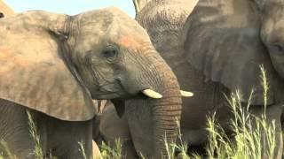 Uganda mit Habari Travel - Teil 1(Individual- und Kleingruppenreisen durch Uganda und Tansania von Habari Travel (www. habaritravel.de), 2016-01-11T20:48:45.000Z)