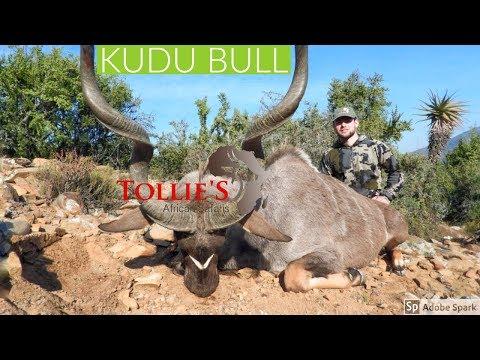Hunting In Africa | Kudu Bull At Tollies African Safaris