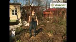 Подкормка роз весной и летом: правила и секреты удобрения + видео