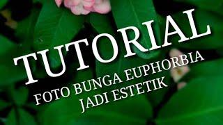 TUTORIAL EDIT FOTO ESTETIK PADA BUNGA EUPHORBIA
