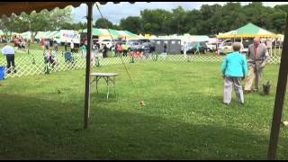 2015 Housatonic Cairn Terrier Club Specialty Show - Sweepstakes