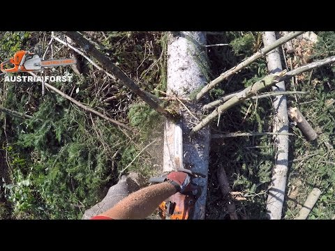 felling and limbing of