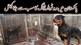 Visited at Vom Venom ( Usama Hameed & Sarrosh Ahmad ) Rottweiler Dog Kennel in Muzaffargarh Pakistan