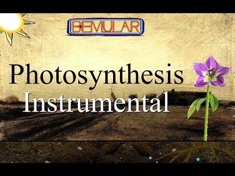 Bemular - Photosynthesis (Instrumental or Karaoke)
