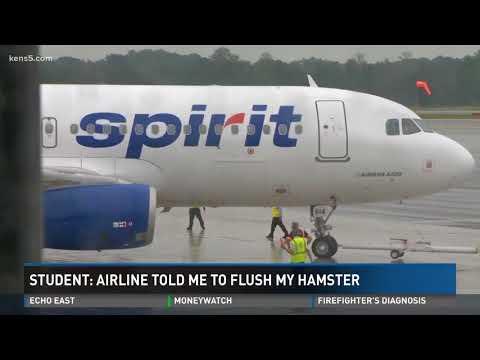 Passenger: Spirit Airlines told me to flush my hamster