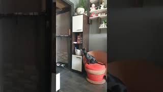 Ориентальный кот, котопёс)