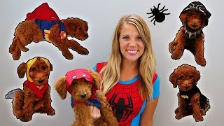 Super Hero Fashion Show With Golden Doodle Puppy!
