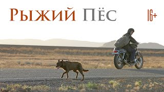 Рыжий Пёс / Red Dog (2011) / Комедия, Драма, Семейный