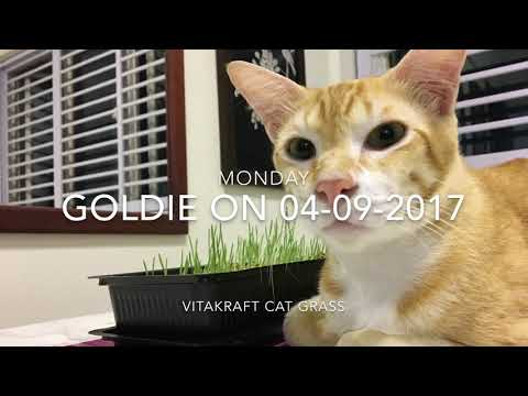 Goldie & Vitakraft Cat Grass