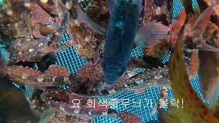 [플레이제주]제주바다 스노클링낚시 오늘의 조황(feat…