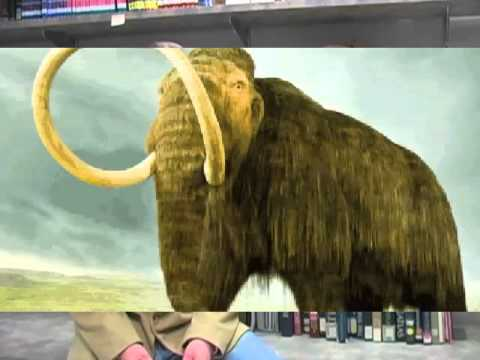bringing back the woolly mammoth and Scientists are developing a theoretical process for resurrecting the extinct animals by genetically engineering elephants.