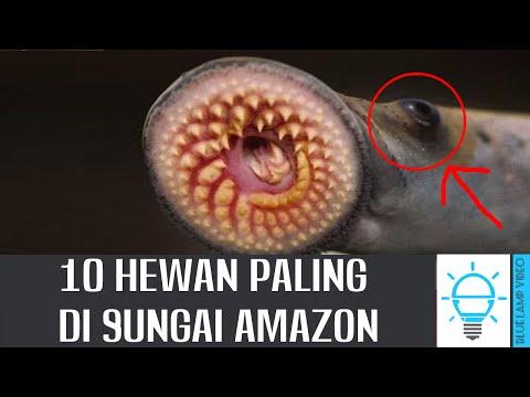 SEREM!!! 10 Hewan Paling Mengerikan Di Sungai Amazon