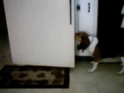 Dog Opens Fridge And Gets Beer