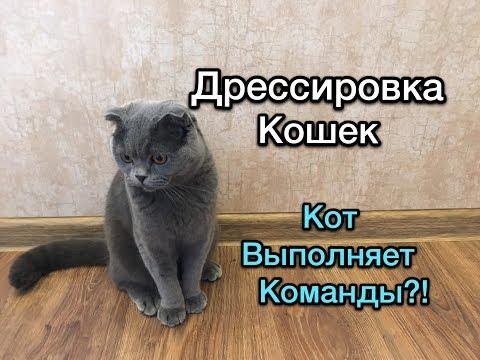 Вопрос: Какой существует самый невероятный результат дрессировки котов?
