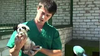 В Харькове открыт Центр содержания бездомных животных