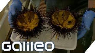 Seeigel: Der neueste Food-Trend | Galileo | ProSieben