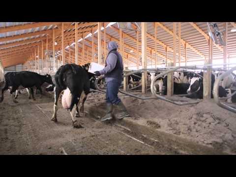 Tubergen Dairy Farm