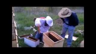 05 21 14 5 frame nuc transition to Warre hive