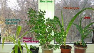 ❤🏡Полезные комнатные растения (нвзвания) для детской комнаты