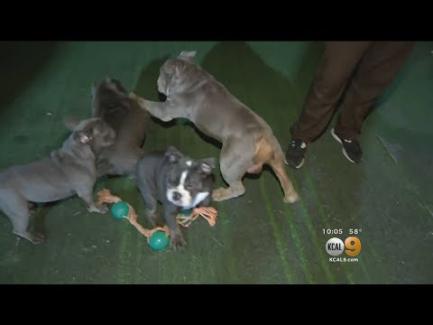 Dozens Of Dogs Living In Squalor Rescued From Puppy Mill