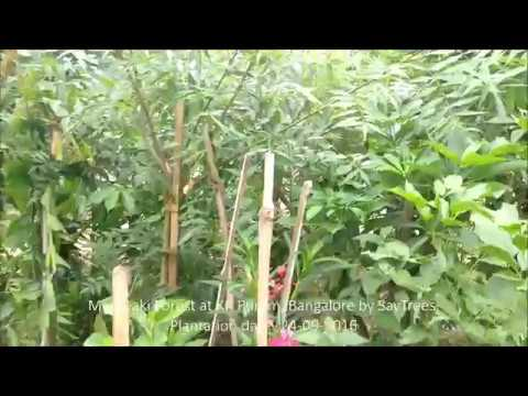 While the pandemic has accelerated digital adoption in sectors that traditionally eschewed digital delivery quite… Miyawaki Forest In Bangalore 8 Month Old Forest Youtube